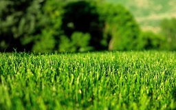 Lawn and Landscaping in Kingwood, Texas