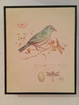 Beautiful Prints of Birds in Ramstein, Germany
