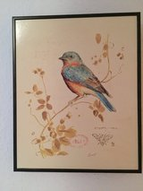 Beautiful Pictures of Birds in Baumholder, GE