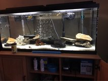 55 Gallon Fish tank with entire set up in Camp Lejeune, North Carolina
