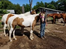 gorgeous pink halter (Mare included) in Fort Riley, Kansas
