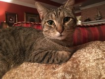 LOST FEMALE CAT in Clarksville, Tennessee