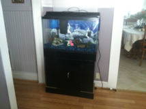 20 gallon fish tank and stand in Fairfield, California