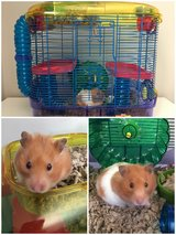 Hamster and cage in Chicago, Illinois