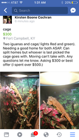Iguanas in Fort Campbell, Kentucky