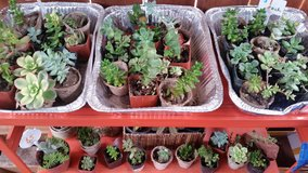 Beautiful Succulents at low prices in Temecula, California