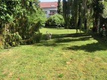 Do you need a dog sitter during day or overnight? in Stuttgart, GE