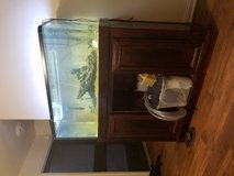 75 gallon tank and Fish in Temecula, California