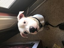 Rehoming dog in Fort Irwin, California
