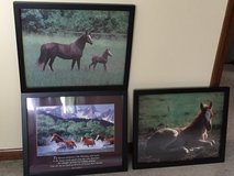 Horse Pictures in Bartlett, Illinois
