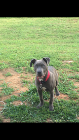 Lost dog in Fort Campbell, Kentucky