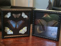 Butterfly shadow box in Baytown, Texas