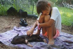 Micro teacup pig in Beaufort, South Carolina