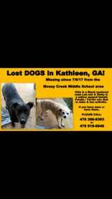 Lost dogs! in Perry, Georgia