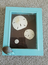 Framed sand dollars in Bolling AFB, DC