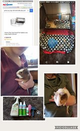 2 male guinea pigs, cage and accessories in Lawton, Oklahoma