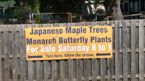 Japanese Maples & Monarch Butterfly Plants in Wilmington, North Carolina