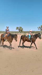 Riding lessons and trail rides in Yucca Valley, California
