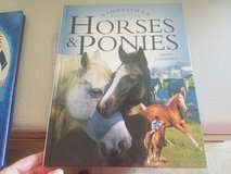 All about Horses and Ponies for kids in Manhattan, Kansas
