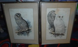 owl pictures in Lawton, Oklahoma