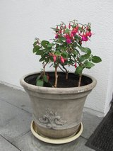 Flowers in nice & quality pots in Stuttgart, GE