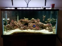 complete 120 gallon saltwater aquarium in Spring, Texas