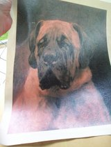 Mastiff Painting in Houston, Texas