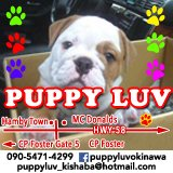 Friendly Bilingual Staff Wanted at Puppy LUV LOCATION in Okinawa, Japan