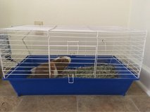free guinea pig with cage in 29 Palms, California