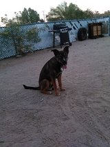 HELP PLEASE OUR FAMILY DOG IS IN THE POUND! in 29 Palms, California