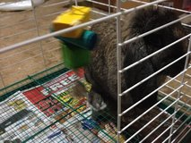 Cute Bunny with Cage and Supplies in Fort Carson, Colorado