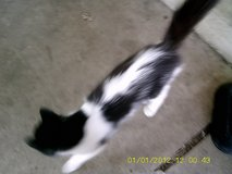 2 Female Cats in Ottumwa, Iowa