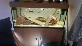 Aquarium with all accessories. in Ramstein, Germany