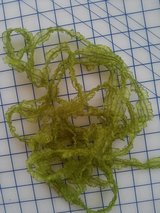 Stretch Lace, Spring Green, (4 yard length) in 29 Palms, California