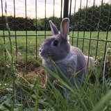 Bunny to a good home! in Spangdahlem, Germany