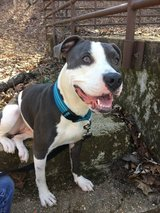 Good Dog to Good Home in Rolla, Missouri