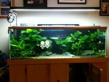 60gal planted aquarium with stand complete with light and external hanging filter  and hardscape in Oceanside, California