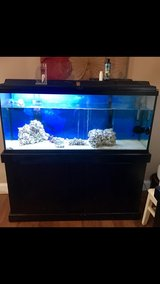 55 gallon saltwater fish tank in Camp Lejeune, North Carolina