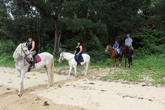 always wanted to ride a horse ? in Okinawa, Japan