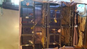 Parakeets, large cage, supplies, everything in Naperville, Illinois