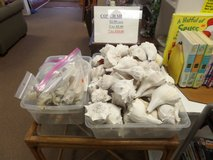 Conchs and shells reduced sale price $1 each in Cherry Point, North Carolina