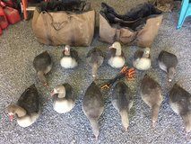 GHG Flocked Full body Speck Decoys in Clarksville, Tennessee