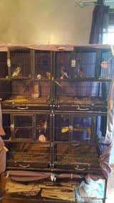 Parakeets, cage, supplies, everything in Naperville, Illinois