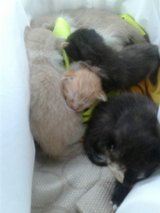 free kittins need home now in Lake Charles, Louisiana