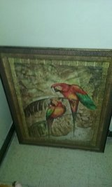 Large Parrot Pictures (2) in Warner Robins, Georgia