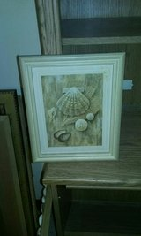 Sea Shells picture in Warner Robins, Georgia