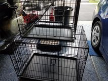 Wire kennels dog in Batavia, Illinois