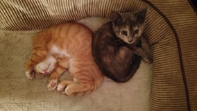 KITTENS LOOKING FOR FOREVER HOME in Cherry Point, North Carolina