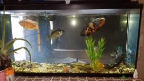 55 gallon fish tank in Fort Leonard Wood, Missouri