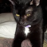 Re-homing  Salem in Kingwood, Texas
